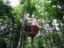 """Nhà """"tổ chim"""" trên cây sồi trăm tuổi ở Pháp"""