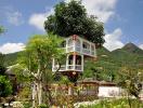 Độc đáo căn nhà 2 tầng được xây trên cây thị gần 100 tuổi