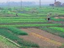 Doanh nghiệp muốn nhận chuyển nhượng đất nông nghiệp cần điều kiện gì?