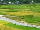 Có được chuyển đất trồng lúa sang trồng loại cây khác không?