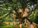 Khám phá ngôi nhà tiện nghi trên cây lớn nhất nước Anh