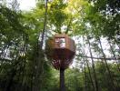Ngôi nhà 23m2 nằm trên cây lấy ý tưởng thiết kế từ tổ chim