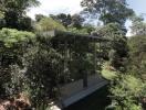 """Nhà kính """"lánh đời"""" của vị học giả giữa rừng nhiệt đới Brazil"""