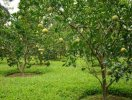 Chuyển đất trồng cây lâu năm thành đất ở cần những thủ tục gì?