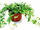 5 loại cây giúp phòng tắm thơm tho, sạch bóng muỗi
