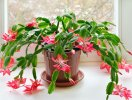 8 loài hoa thích hợp trồng trong nhà trong thời tiết thu-đông