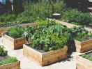 Tổng hợp kinh nghiệm thiết kế vườn trên mái cho dân phố thị