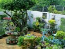 Mải mê ngắm khu vườn sen đá đẹp lung linh của mẹ 8X bỏ phố về quê