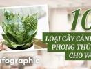 [Infographic] 10 loại cây cảnh phong thủy giảm mùi hôi và độc tố cho nhà vệ sinh