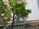 Căn nhà duyên dáng, góc nào cũng xanh mướt của gia đình trẻ ở Vũng Tàu
