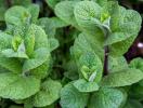 7 loại cây giúp xua đuổi côn trùng có hại ra khỏi vườn nhà bạn