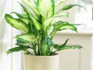 Gợi ý những cây cảnh ưa bóng vừa dễ trồng, vừa thanh lọc không khí trong nhà