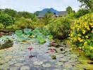 Thăm nhà vườn ngoại ô 4000m2 của nữ Tiến sĩ yêu thiên nhiên
