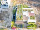Nhà Đà Nẵng thân thiện với môi trường, có cả vườn rau trên mái