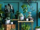 10 cây trồng trong nhà vừa đẹp lại vừa dễ chăm