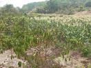 Đất BHK là gì - có nên rót vốn vào đất BHK không?