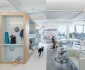 Văn phòng độc đáo ở Mỹ có không gian vui chơi dành cho chó