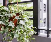10 cây trồng trong phòng ngủ sản sinh oxy, thanh lọc không khí giúp bạn ngon giấc hàng đêm