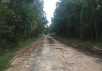 Bán đất mẫu tại xã Tân Bình, thị xã La Gi, Bình Thuận, gần KCN Tân Bình, giá 750 triệu/mẫu