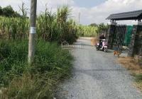 Bán 500m2 đất vườn đường xe tải Lộc Trung, xã Mỹ Lộc, huyện Cần Giuộc, Long An