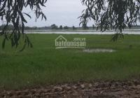 Cần tiền bán gấp 2 công đất Xã Thái Mỹ, Huyện Củ Chi