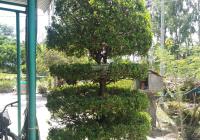 Cần bán đất ở 2 mặt tiền diện tích 712m2, thôn Đông Hoà, Tịnh Hoà, TP Quảng Ngãi