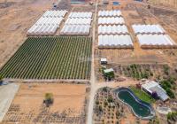 Bán đất khu trang trại dưa lưới Văn Minh, điện nước có sẵn xe tải vào tận nơi - 0706.017.007
