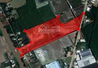Bán 6.2 ha đất xây xưởng, mặt tiền QL N2 Thạnh Hóa, tỉnh Long An