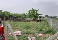 Bán 500m2 đất vườn Mỹ Lộc - Cần Giuộc giáp Bình Chánh chỉ 1,5 tỷ, đường xe hơi, SHR. Giá: 1,5 tỷ