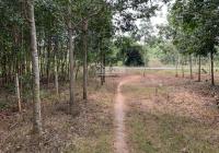 Bán đất xã Hòa Bình, huyện Xuyên Mộc, Bà Rịa VT, diện tích 8587m2. Giá trả trước 650tr/1000m2