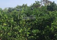 Bán đất mặt tiền Quốc lộ 61, Hậu Giang - Diện tích 3400 m2 mặt tiền ngang 24m