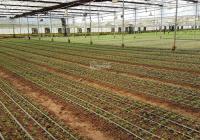 Bán đất vườn nông nghiệp tại Đạ Nhim, Lạc Dương, Lâm Đồng. 50 ha, đang sản xuất, sổ đỏ đầy đủ