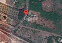 Bán đất trang trại 2 mặt tiền tại Phước Hải, Bà Rịa Vũng Tàu