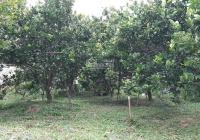 Bán đất vườn mặt tiền 33.4m, Tỉnh Lộ 851, ngã 5 Tân Thành, xã Long Hậu, Lai Vung
