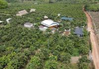 Đất vườn giá rẻ đối diện KCN Dầu Giây chỉ 500 triều. lô có sẵn vườn cây ăn trái.