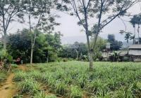 Chuyển nhượng lô đất nhỏ xinh giá rẻ tại Hoà Sơn, Lương Sơn, Hoà Bình