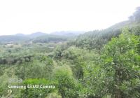 Đất Hòa Bình giá rẻ S = 14000m2 tại Lạc Hưng, Yên Thủy, Hòa Bình