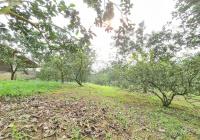 Cơ hội sở hữu ngay 1.3ha đất thổ cư giá đầu tư tại Yên Thủy, Hòa Bình