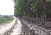 Bán 2,8 mẫu đất đang trồng tràm tại huyện Xuân Lộc, Đồng Nai, giá 7 tỷ, LH 0379871838