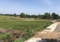 Bán đất Củ Chi, xã Tân Thạnh Tây, diện tích 2850m2 đất trồng cây lâu năm giá 650nghìn/m2