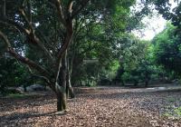 Bán 2000 m2 vườn chôm chôm Thái cách sân bay Long thành 2,5 km