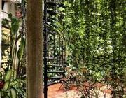 Cho thuê biệt thự sân vườn 3 lầu 8 phòng đường Hồ Hảo Hớn, P. Cô Giang Quận 1 DT 15x23m giá 70tr/th