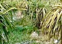 Chính chủ cần bán gấp lô đất vườn có thổ cư Mỹ Tịnh An, Chợ Gạo, Tiền Giang DT: 2300m2 gía: 1.4 tỷ