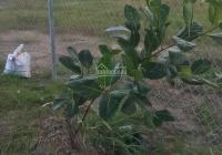 Rẻ nhất tại TT Cần Giuộc lô đất vườn 500m2, giá chỉ hơn 1 tỷ, đường XH 0889146668