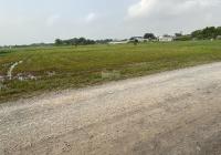 1500m2 lúa (22,8 x 65) 1 sẹc TL825 rẻ vào 400m, đường 6m, xã Tân Phú