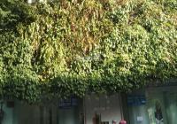 Bán biệt thự khan hiếm Phan Kế Bính, P. Đa Kao, Quận 1 DT: 10x20m trệt 2 lầu giá 72 tỷ