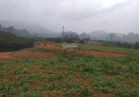 Cần chuyển nhượng trang trại chưa sử dụng cùng cây ăn quả