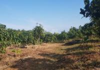 Chính chủ cần bán gấp trang trại siêu đẹp tại xã Ninh Sơn, Thị xã Ninh Hòa, Tỉnh Khánh Hòa