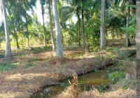 Đất rẻ Hòa Định, Chợ Gạo, cây lâu năm, chính chủ, bớt lộc khách thiện chí