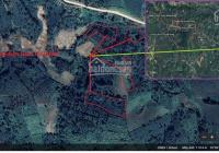 Chính chủ bán 15000m2 đất rẫy đang trồng café Km21 Cỗ Nhỗi, Hướng Phùng, Hướng Hóa, Quảng Trị
